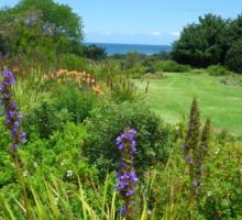 Harold Porter Botanical Garden on day tour from Stellenbosch