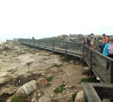 Passes and Sea tour Penguins